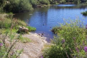 Lake-Orth